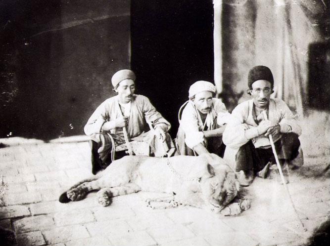 شیر ایرانی