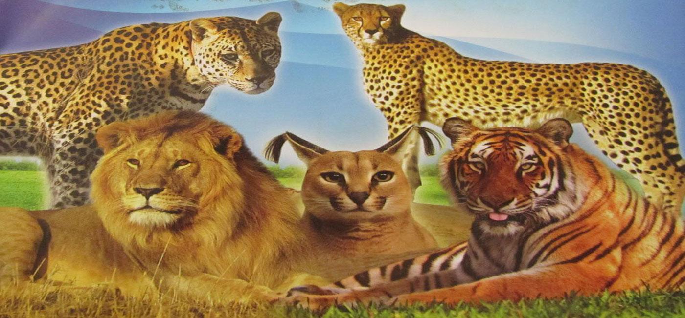 معرفی حیوانات معروف و عجیب ایرانی